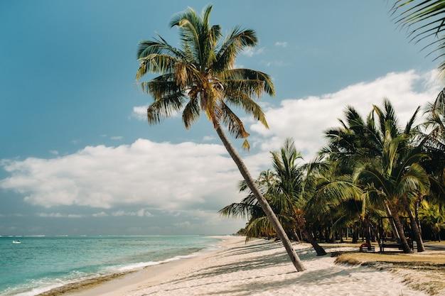 수평선에 아름다운 해변, 야자수와 구름. 아프리카, 모리셔스, 남부, 르몬 근처.