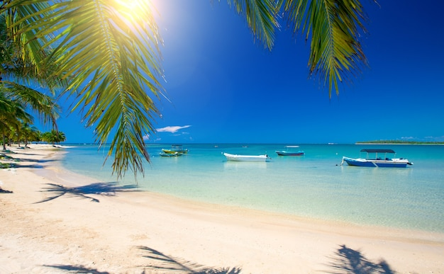 美しいビーチ。手のひらが周りにある素敵な熱帯のビーチの眺め。休日と休暇の概念。