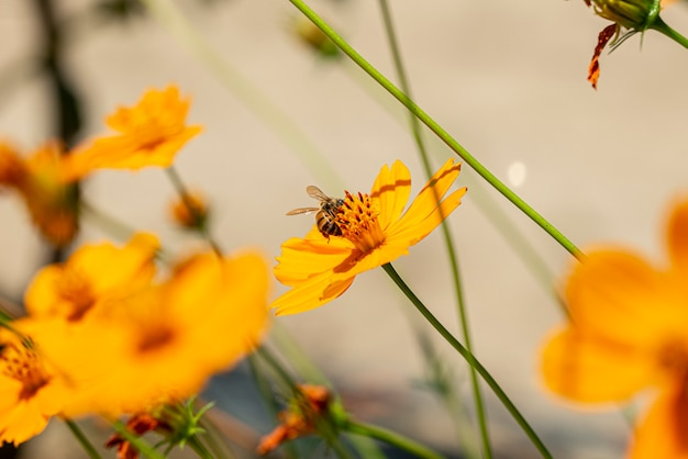 晴れた日の黄色い花の美しい蜂のクローズアップ