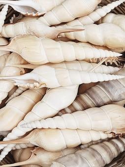 Красивые бежевые большие ракушки Premium Фотографии