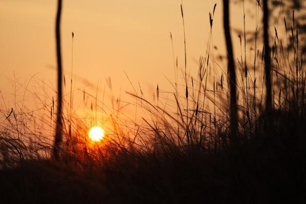 Beautiful bewitching sunset on the background of grass (wheat, rye)