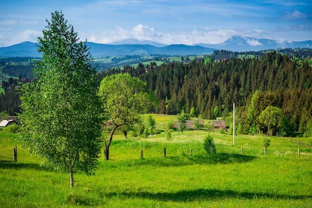 흰 구름의 배경에 대해 가문비 나무와 낙엽수와 잔디 사이의 구릉 지역에 위치한 시골 마을의 아름다운 요염한 전망