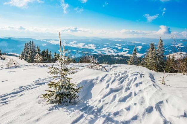 흰 구름과 밝은 태양의 푸른 하늘을 배경으로 눈 더미 사이의 언덕에서 자라는 소나무와 가문비 나무 숲의 아름다운 요염한 전망