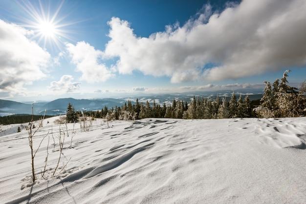 雪の吹きだまりの間の丘に生えている松とトウヒの森の美しい妖艶な景色