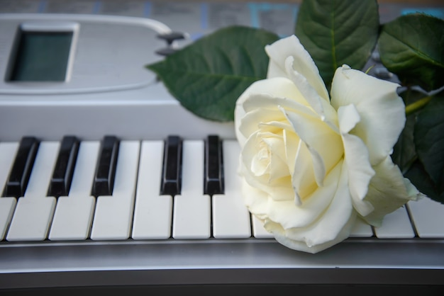 Beautiful big white rose flower lies on the black and white keys of the piano, synthesizer