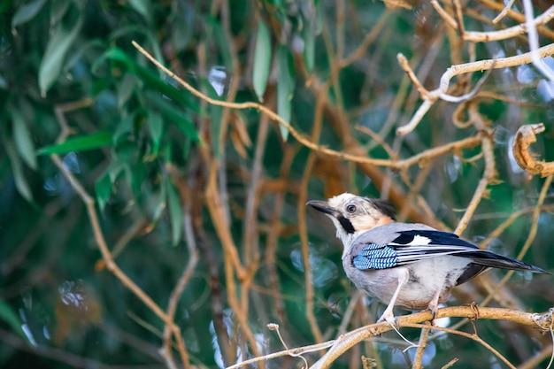 단풍 사이 나무에 아름 다운 새 클로즈업. 고품질 사진