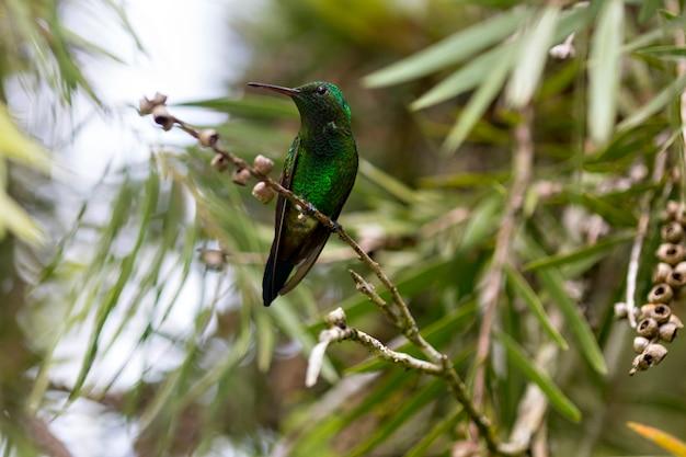Beautiful bird hummingbird on wild