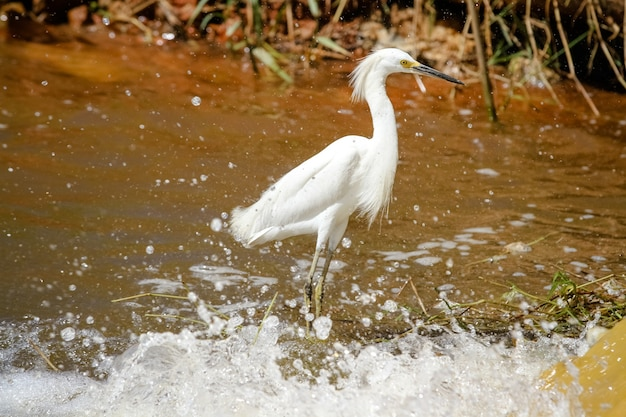 Beautiful bird hunting for fish in the pond