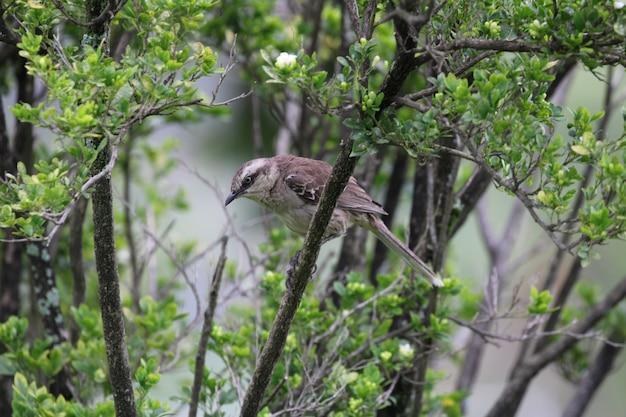 美しい鳥の宿の自然のクローズアップの詳細