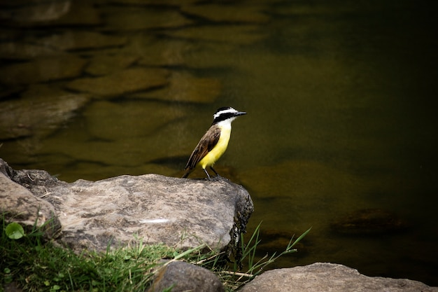 Beautiful bird near river closeup