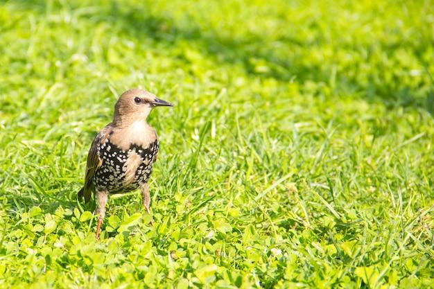 Красивая птица на зеленой траве скопируйте пространства для текста красивая красочная птица на зеленой траве