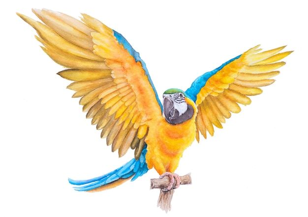 Beautiful bird parrot macaw hand paint watercolor