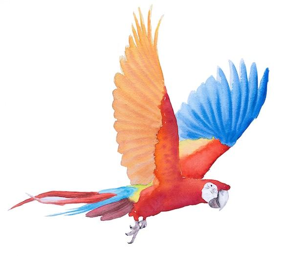 Beautiful bird parrot macaw hand paint watercolor Premium Photo