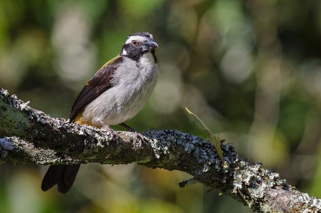 아름 다운 새는 오래 된 나무의 가지에 자리 잡고