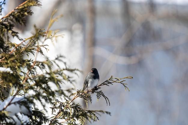 Красивая птица сидит на ветке дерева