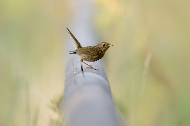 Beautiful bird sitting on a pipe among the green grass