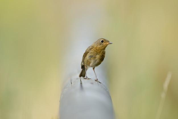 Bello uccello che si siede su un tubo fra l'erba verde