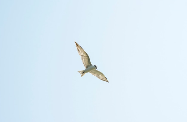 Beautiful bird on the sky
