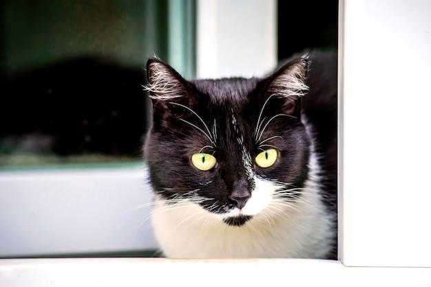 Красивый черно-белый кот смотрит в открытое окно