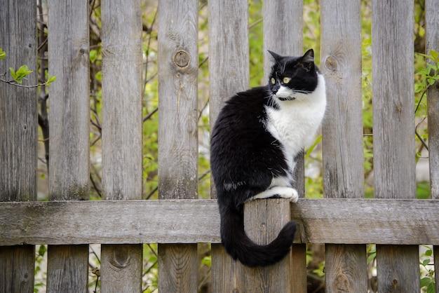 Красивый черно-белый кот сидит на деревянном заборе в саду