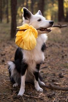 Красивая черно-белая собака с обедом