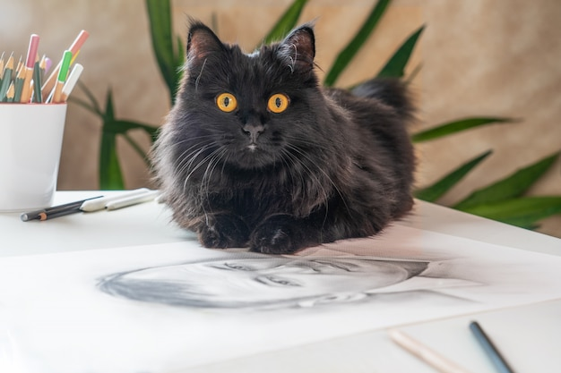 A beautiful black cat with yellow eyes is lying on the table with graphic drawings.