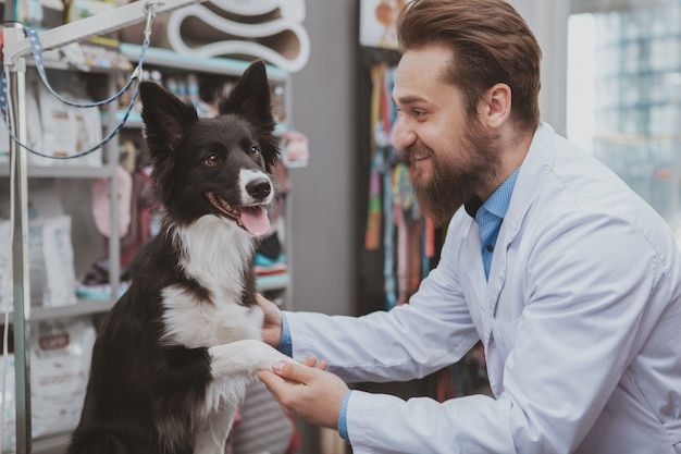 Beautiful black dog getting examined by professional veterinarian at the animals hospital