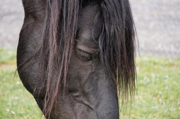 초원에서 아름 다운 검은 말