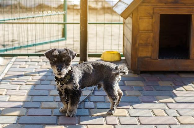 화창한 날에 부스 근처 아름 다운 검은 똥 개. 동물을위한 집. 선택적 초점