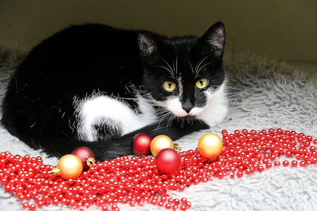 Beautiful black and white cat lying next to red and gold christmas ornaments