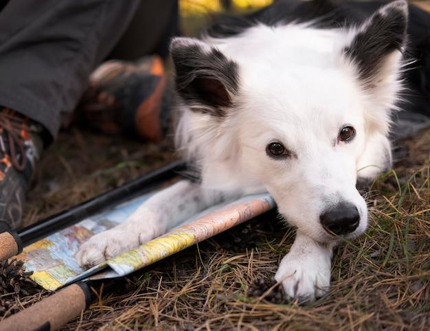 Bella vista frontale del cane bianco e nero