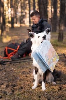 Bellissimo cane bianco e nero che tiene una mappa