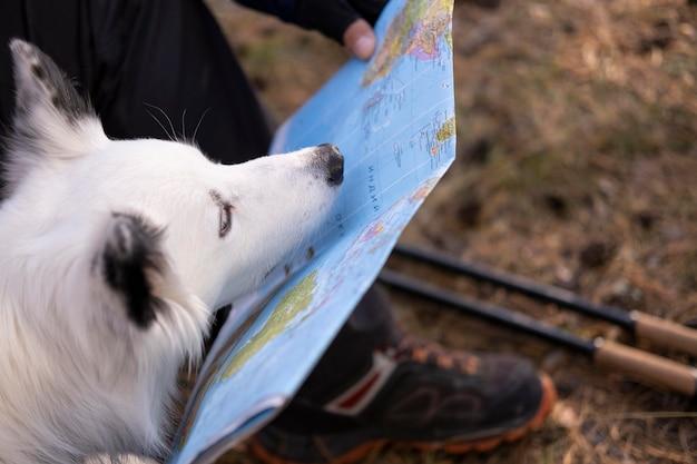Bellissimo cane bianco e nero con mappa