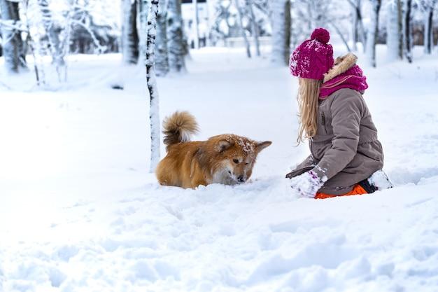 冬の日にふわふわの美しいブロンドの女の子とコーギー