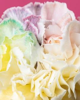 아름 다운 피어 꽃 클로즈업