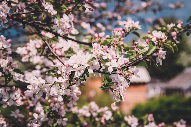 Красивый цветущий цветок в саду, летний фон. фотография волшебный цветок на размытом фоне