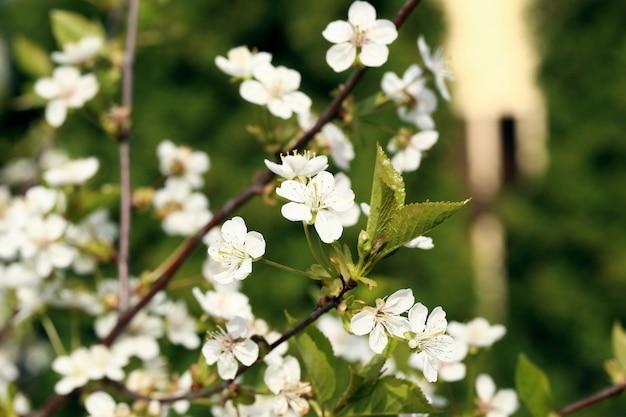 Beautiful blooming flower