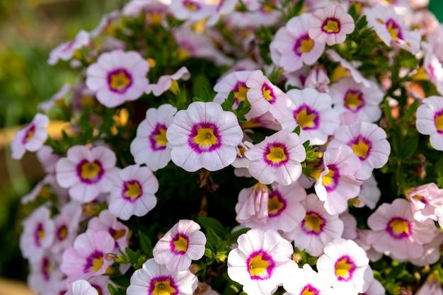 정원, 여름 배경에서 아름 다운 피 꽃입니다. 흐린 배경에 사진 마법의 꽃