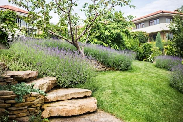 Красиво цветущая лаванда растет в саду частного особняка