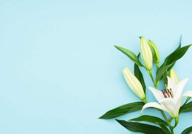 青い背景に美しい咲くユリの花