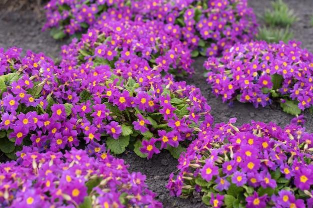 公園に咲く美しい春の花