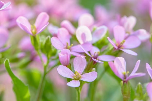 아름 다운 피 봄 꽃. 봄 시즌 인사말 카드