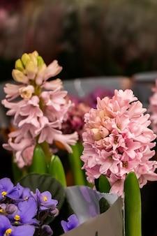 Красивые цветущие весенние гиацинты в горшках крупным планом.