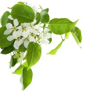 아름 다운 꽃 사과 나무 절연