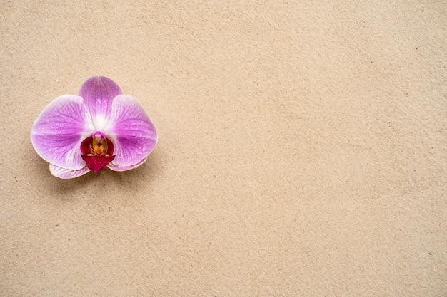 모래 배경에 아름 다운 꽃 보라색 phalaenopsis 난초입니다.