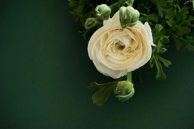 깊은 녹색 배경에 아름 다운 꽃 흰 꽃, 텍스트를 위한 공간