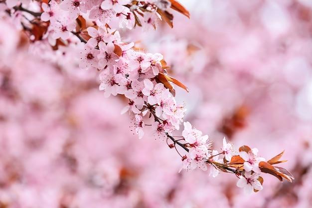 ぼやけた表面の美しい開花枝