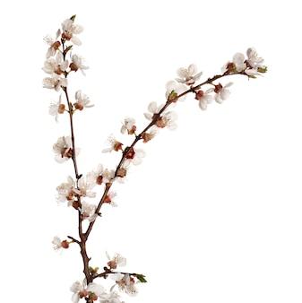 白地に咲く美しい枝