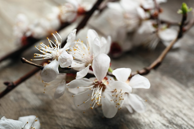 Beautiful blossoming branch on wooden surface, closeup