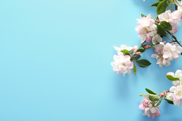 青い背景の美しい花の枝